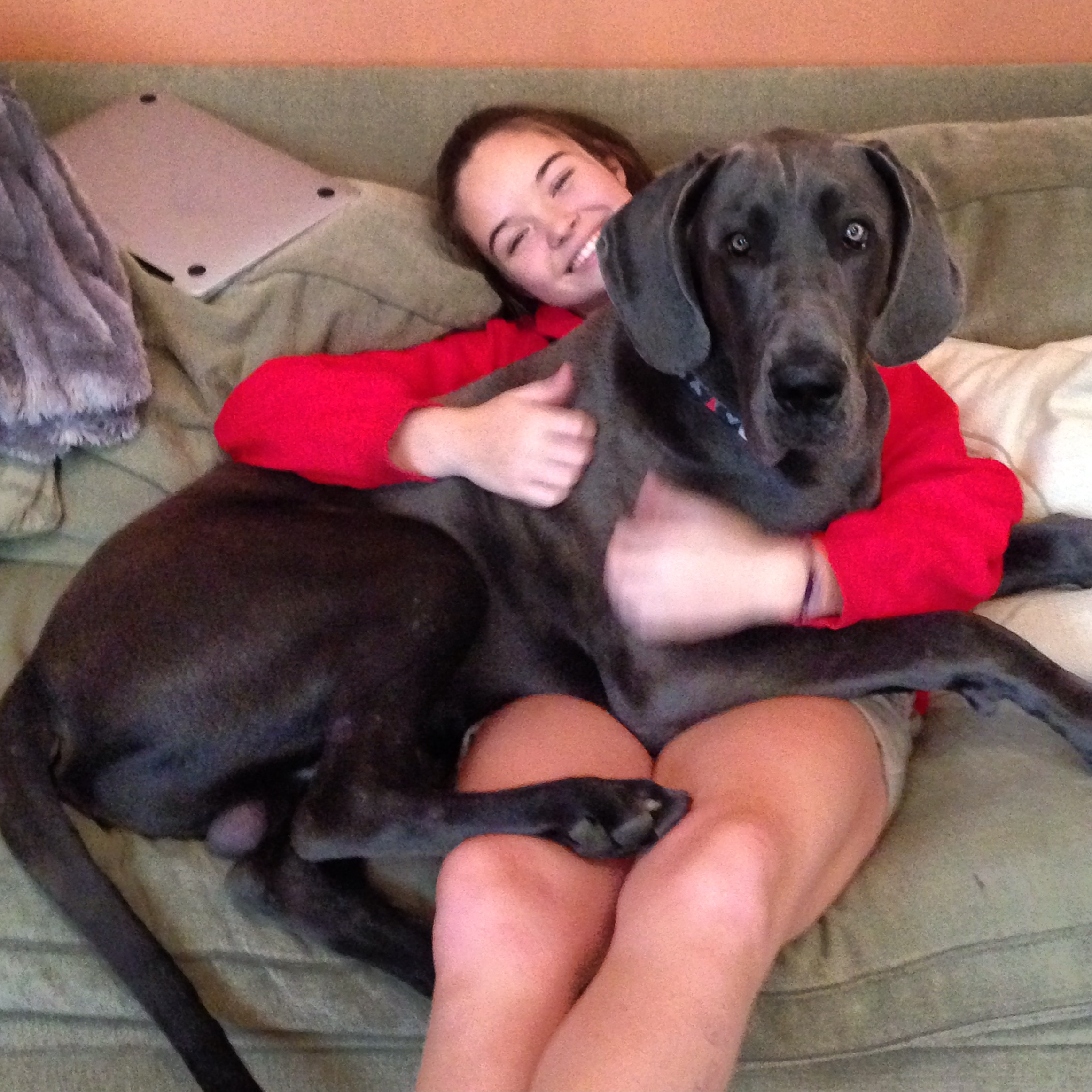Great Dane Breed With Teen Porn 13